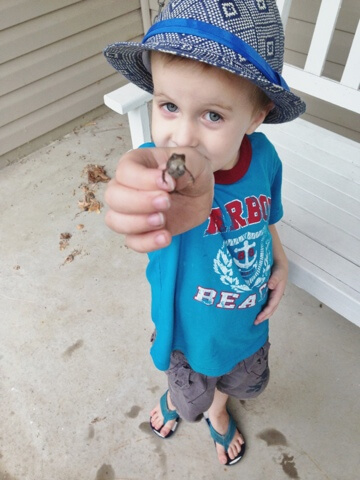 boy catches little frog