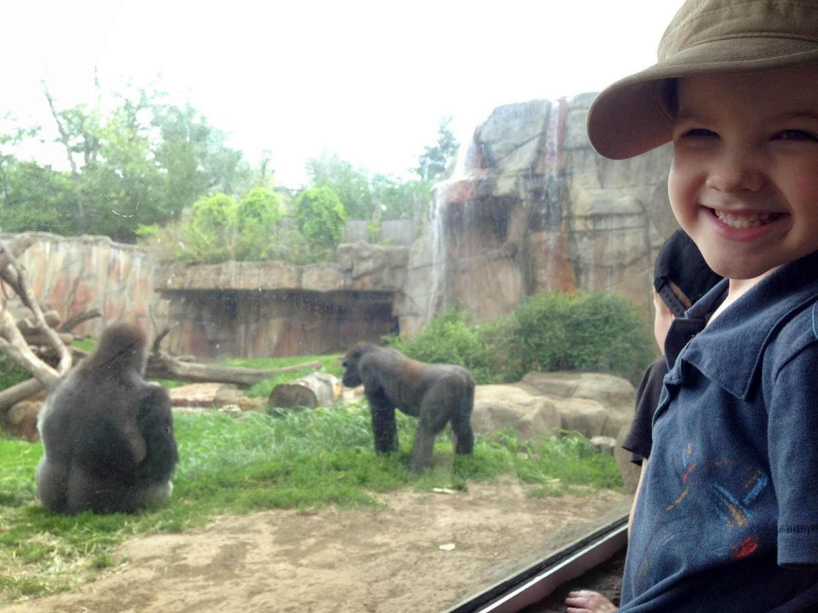 young boy and gorillas at zoo