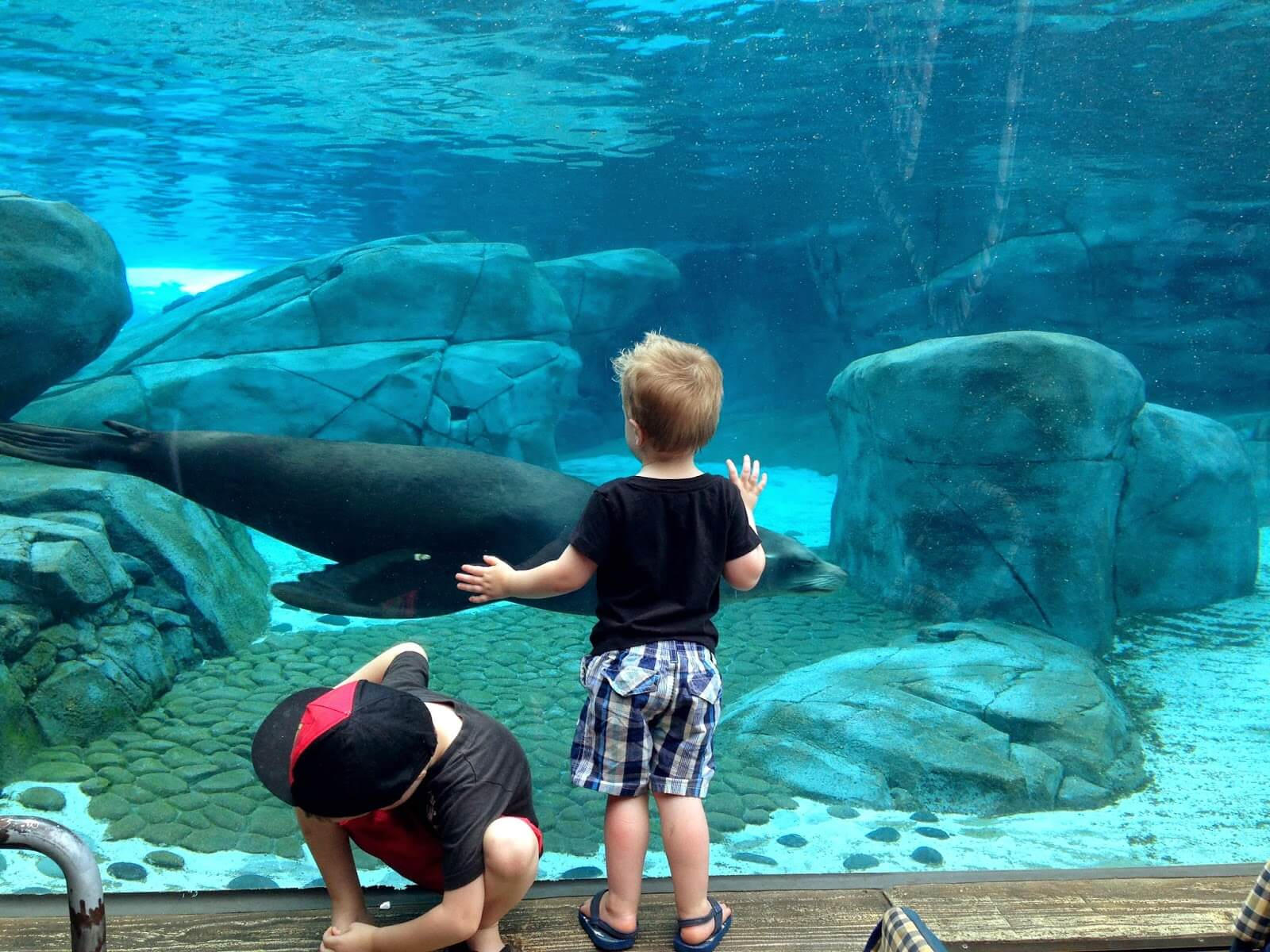 boy and his brother at zoo