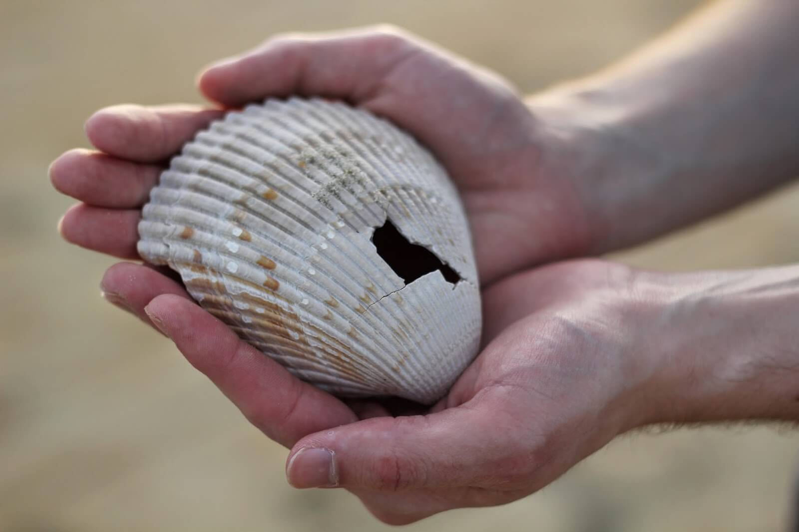 seashell with a hole