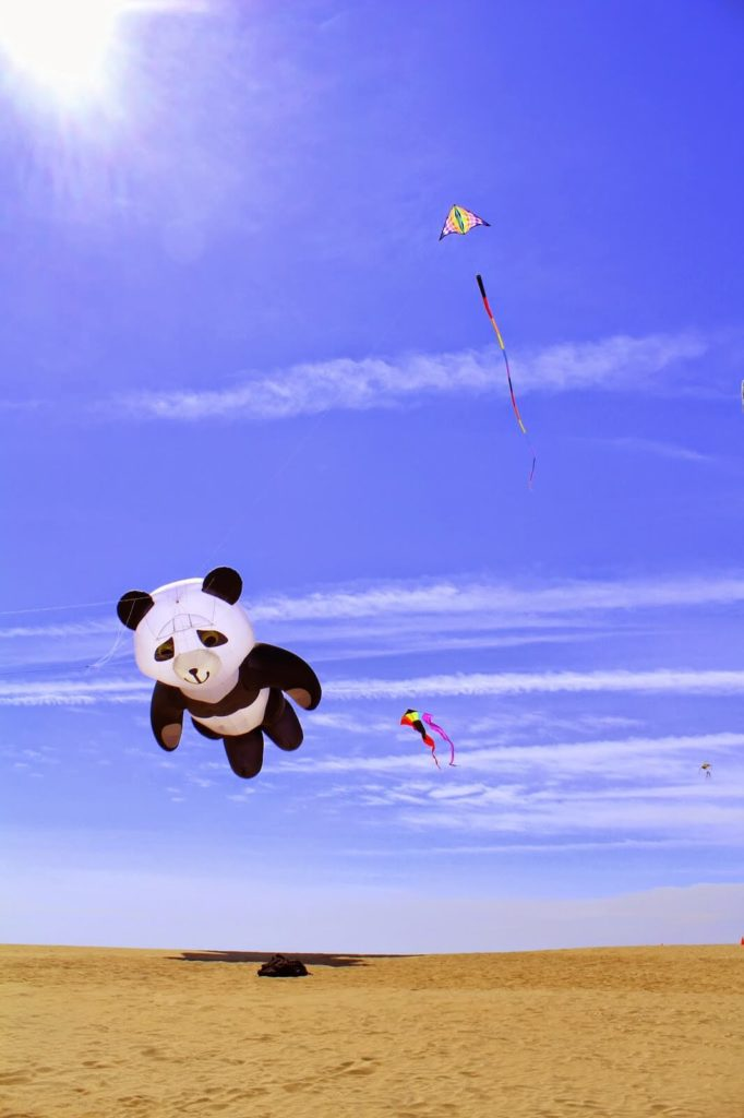cool giant panda kite