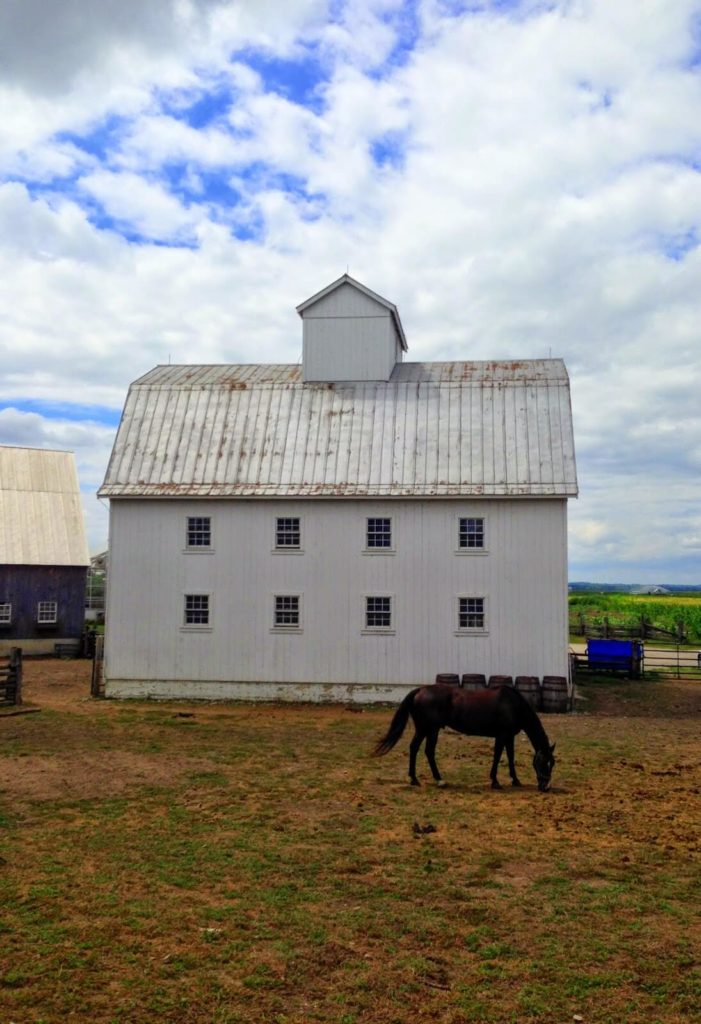 white barn on farm