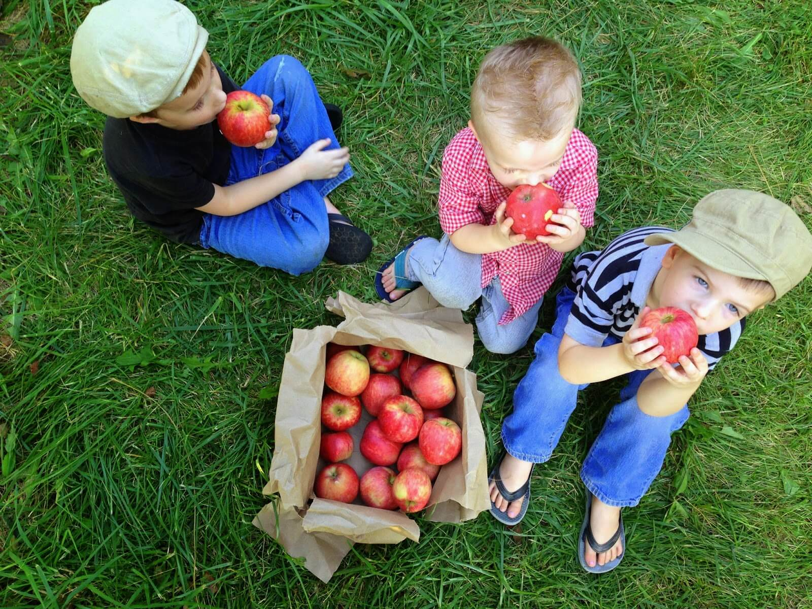 apple picking with young boys