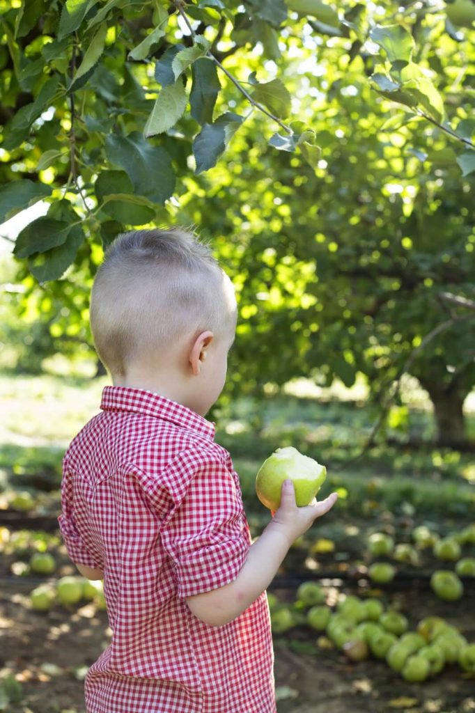 toddler boy eating apple