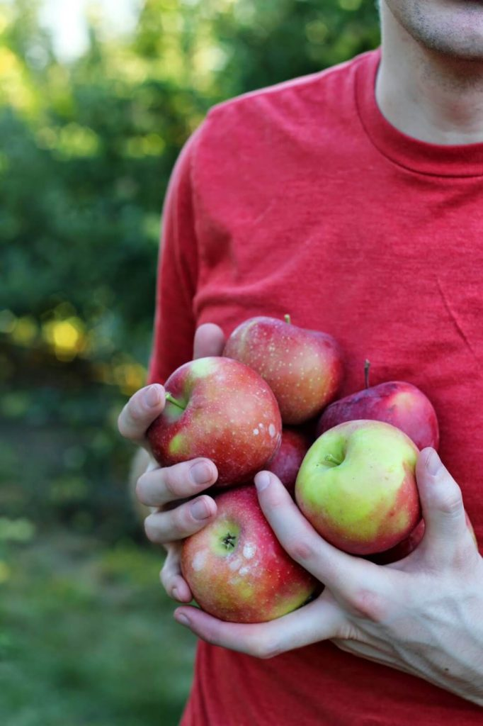 holding a lot of apples