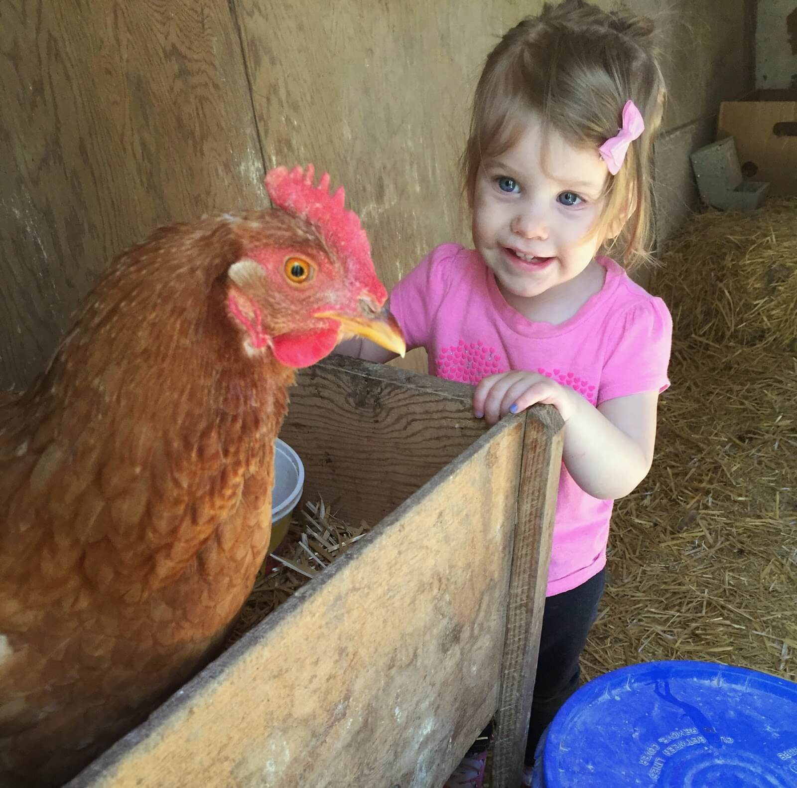 girl and a chicken