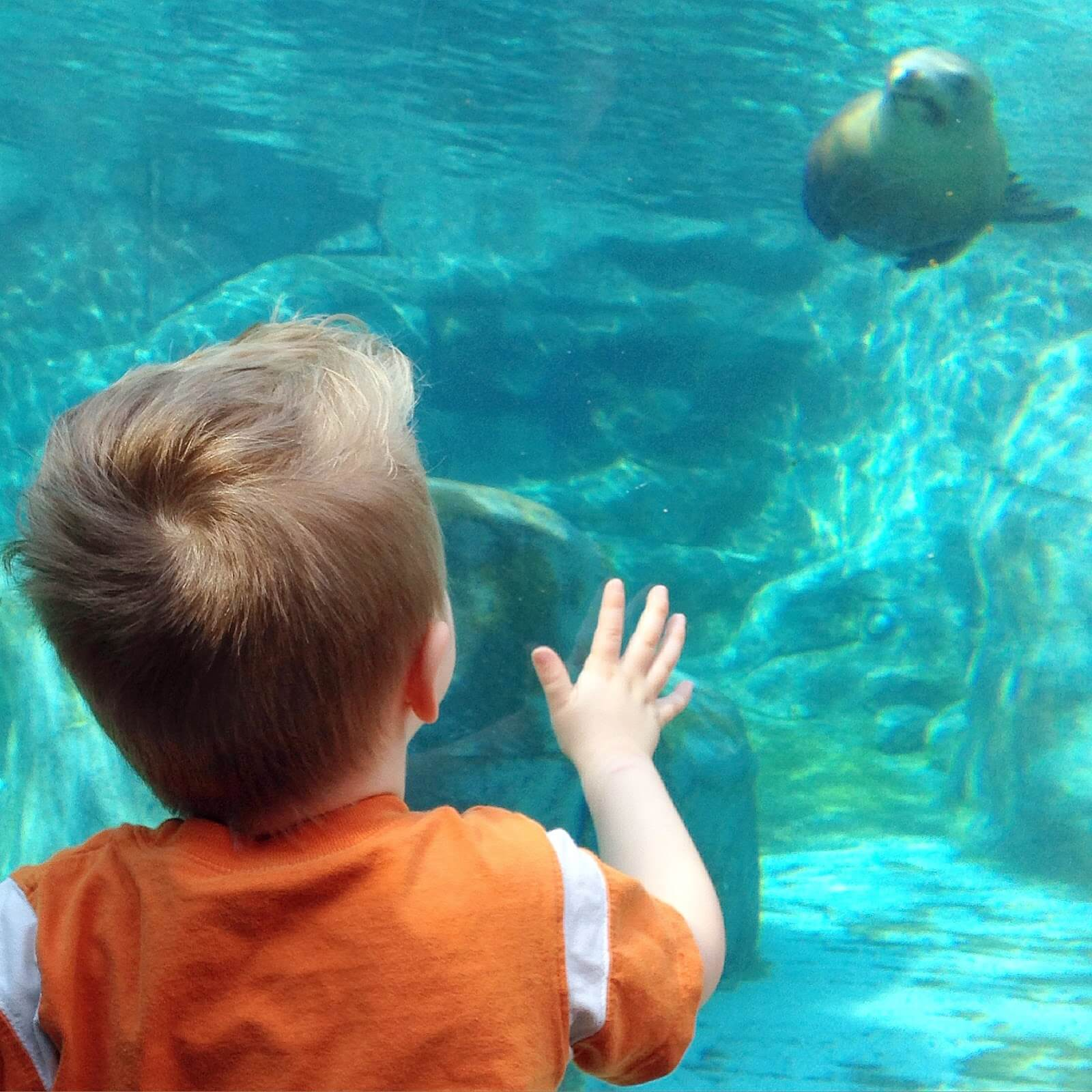 underwater tunnel at zoo
