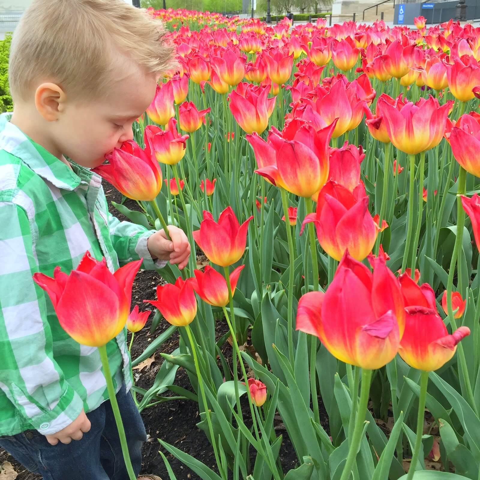 boy smelling pink flowers
