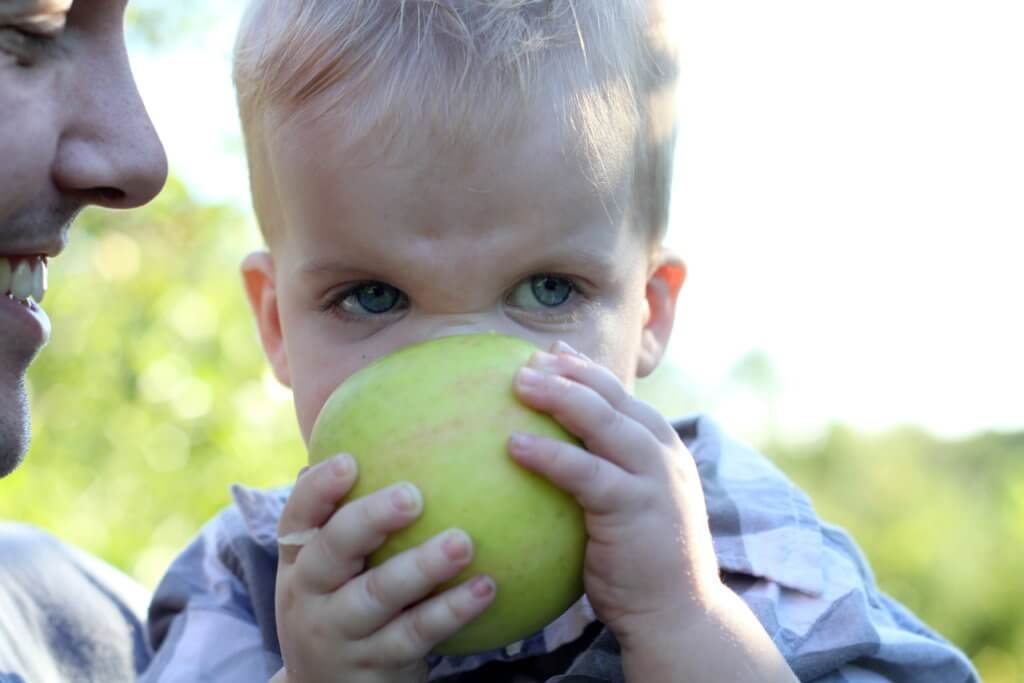 baby boy eating and digging face into apple