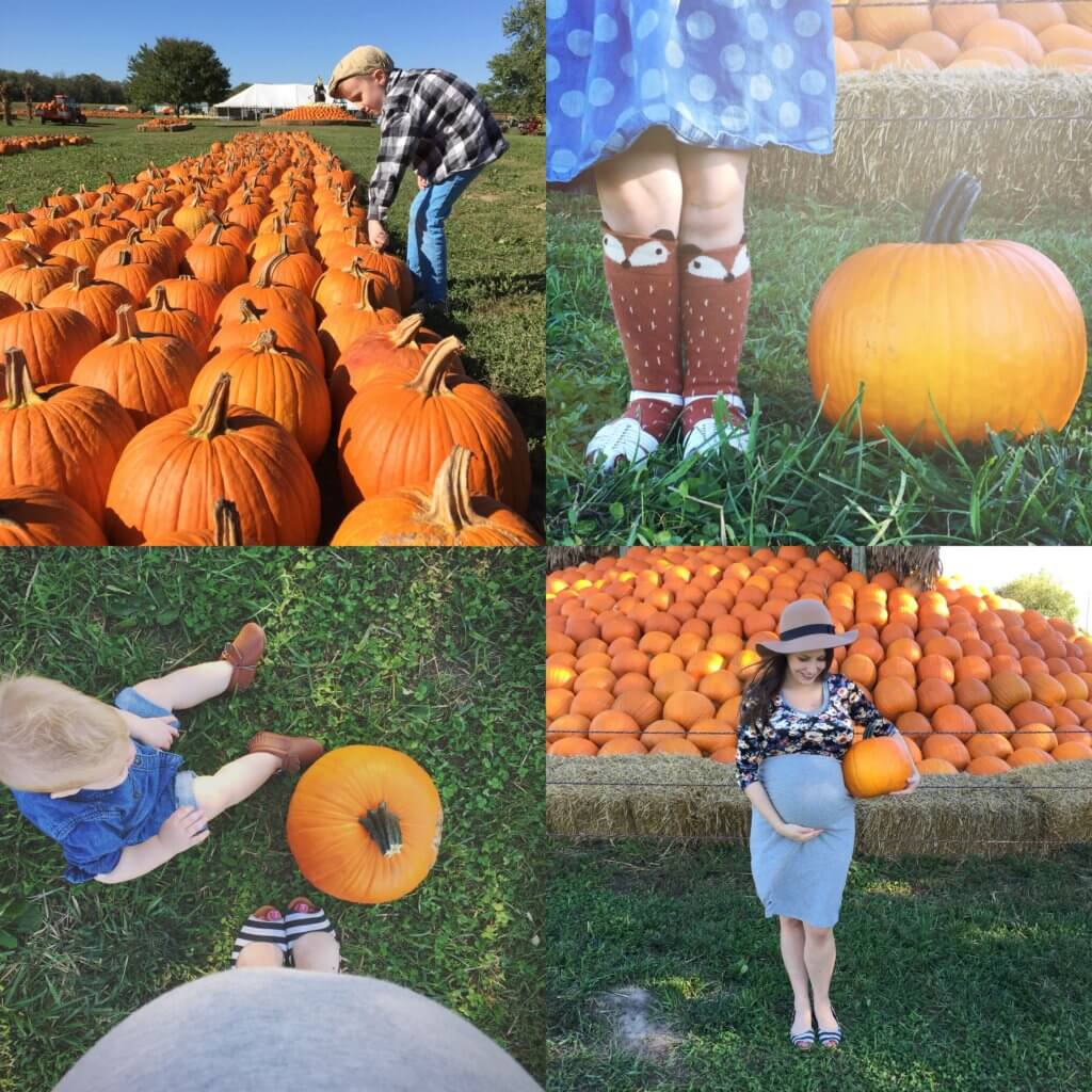 picking out pumpkins at the pumpkin patch